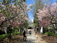 香取神宮の梅