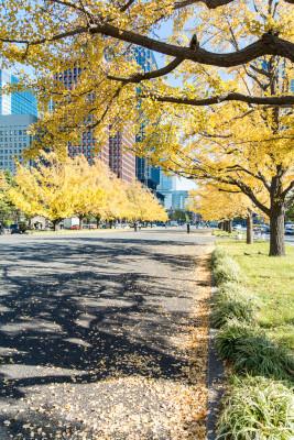 東京駅へは銀杏並木が続く