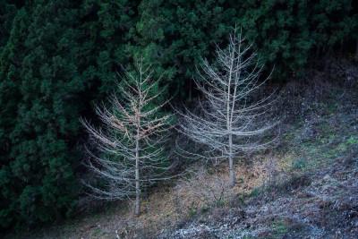 木々も寒そうです