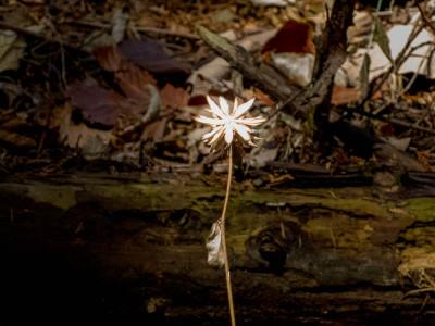 花のような枯れ葉