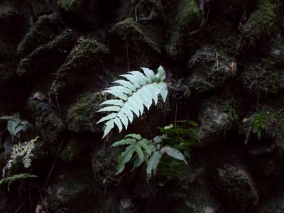 冷たい色の葉