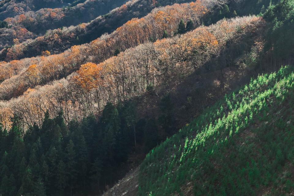 金比羅尾根からの眺め