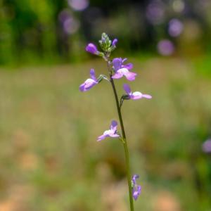 見知らぬ花